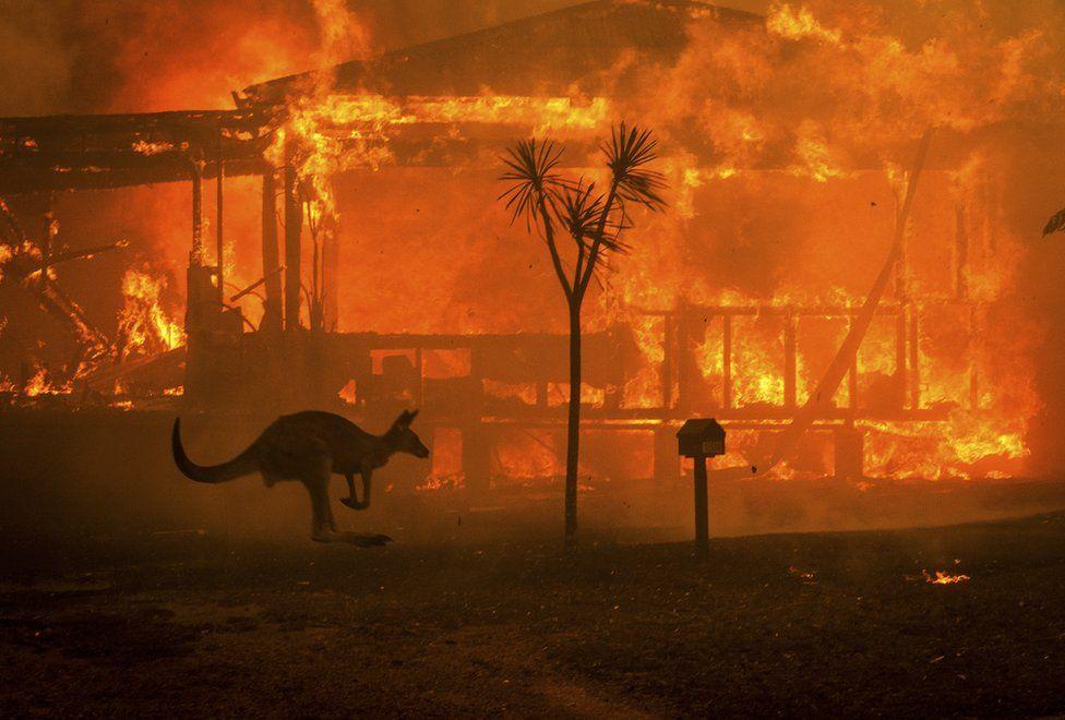 FREE Online Community Healing for Australian Bushfires